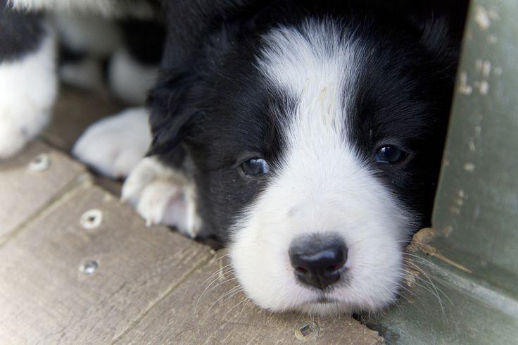 ❤️️Cutest Puppies