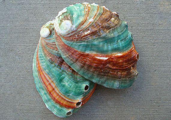 Russian Abalone Seashell 253 by seashellsupply on Etsy, $3.50