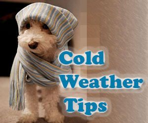 Protect your pets with these cold weather tips