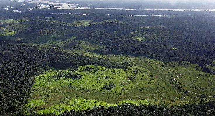 Populações pré-colombianas podem ter domesticado a Amazônia  http://controversia.com.br/3269