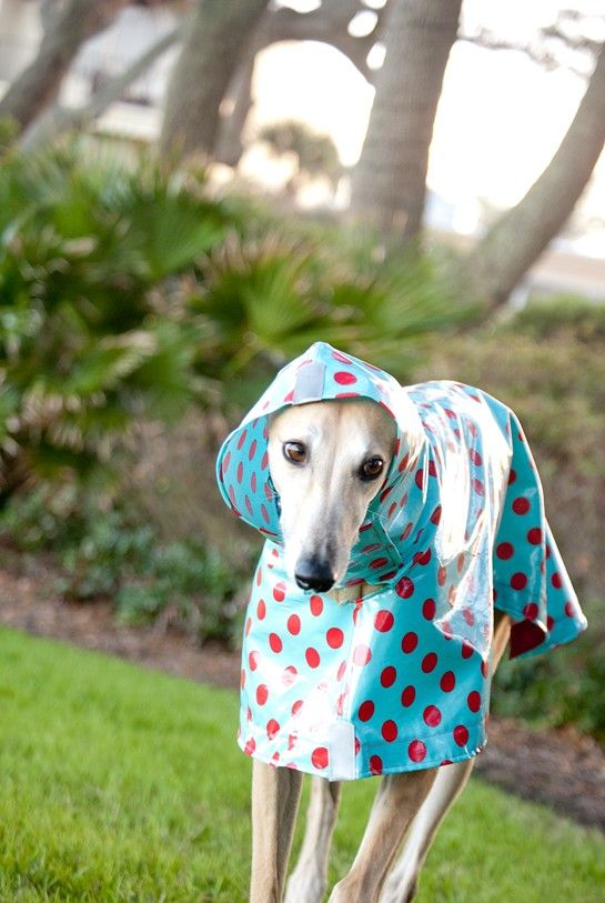 Dog Raincoat Slicker - Red Polka Dots on Turquoise @Katie Williams..............is this cute or WHAT?
