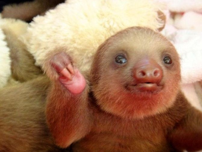 Best SlothsSloths And More Sloths Images On Pinterest - 5 month old baby and sloth are the most unlikely of best friends