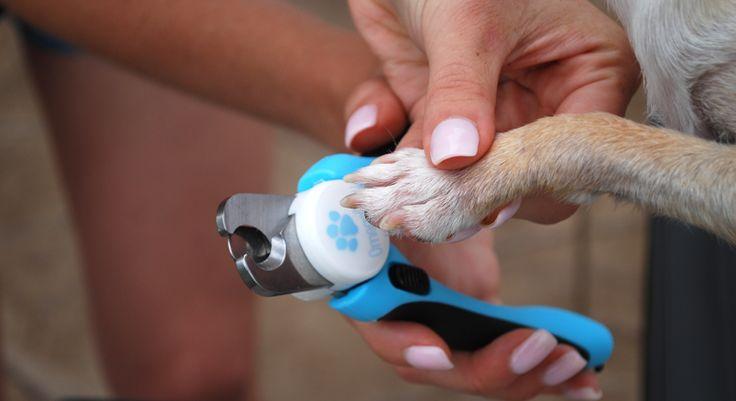 how to cut dog toenails black