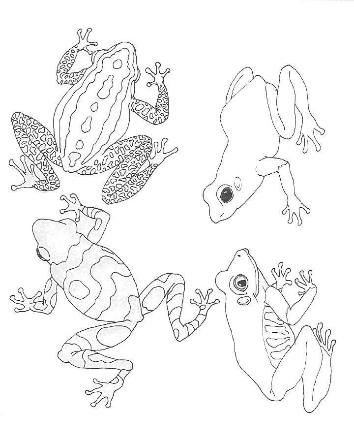 free Jan Brett coloring pages (activities) + paints + giant roll of paper = rain forest wall mural