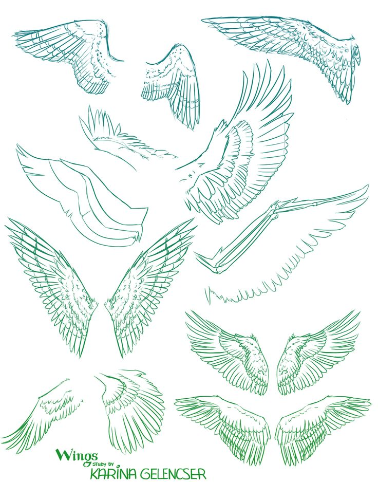 Wings study by RDJpwns on deviantART via PinCG.com