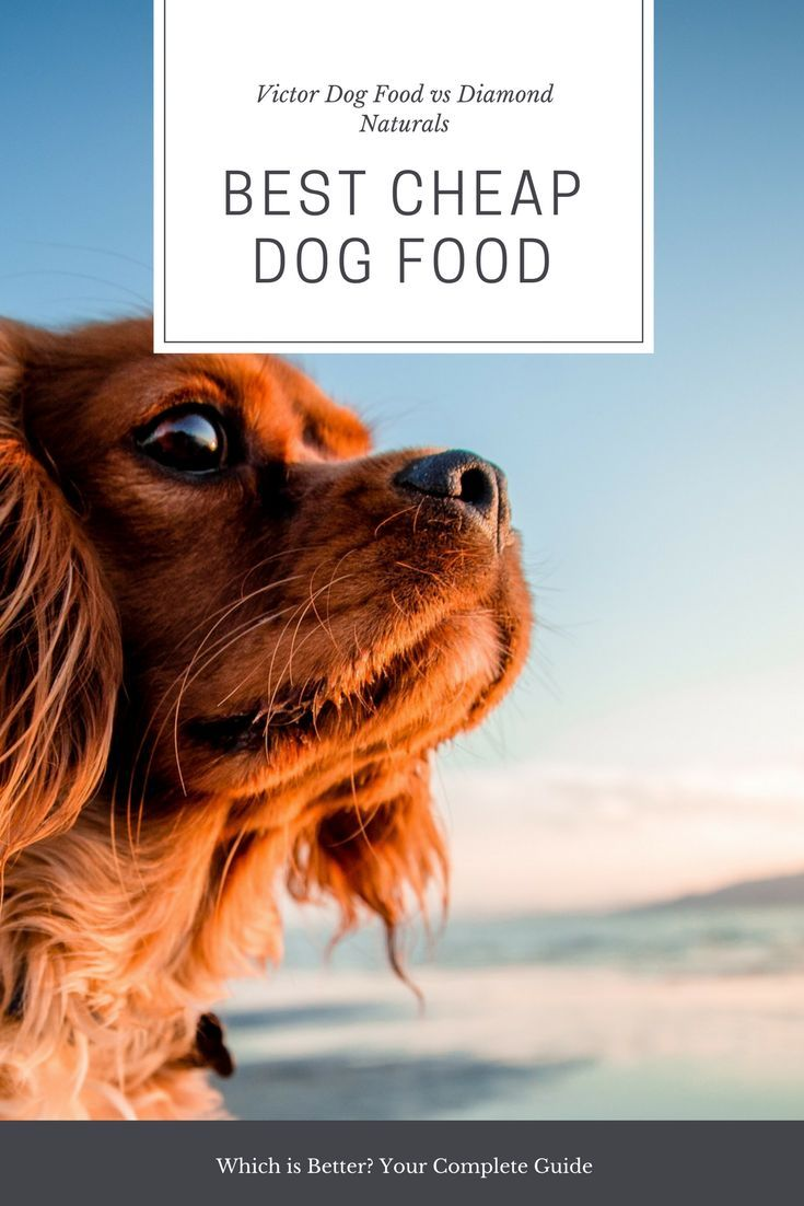 Victor Dog Food Vs Diamond Naturals Your Complete Guide In 2019