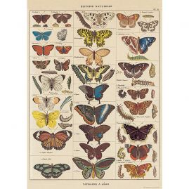 Een vintage vlinder kaart als prachtige cadeaupapier of frame als kunst voor elke kamer in het huis.
