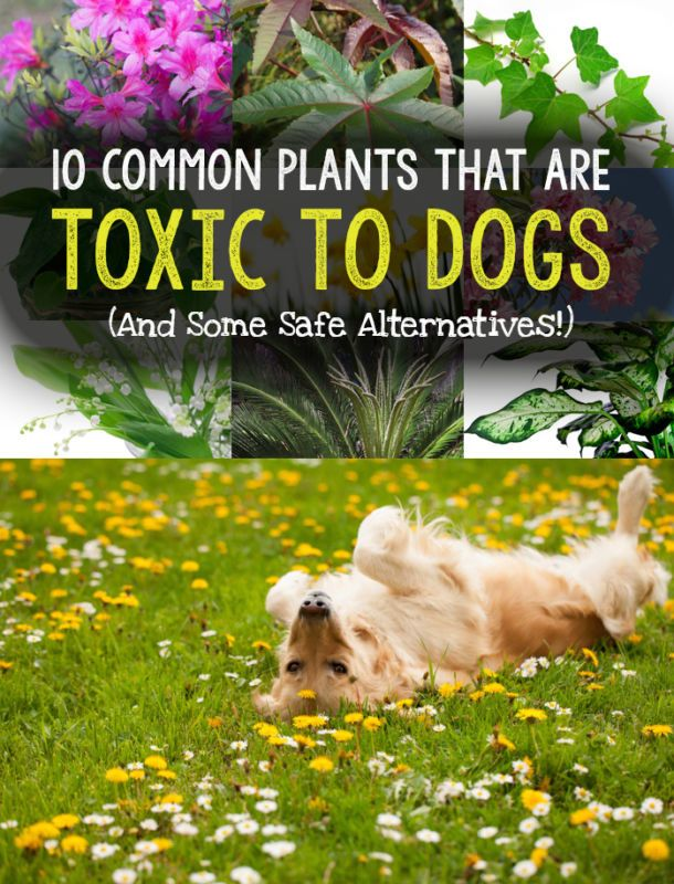 10 common plants that are toxic to dogs safe Houseplants not toxic to cats