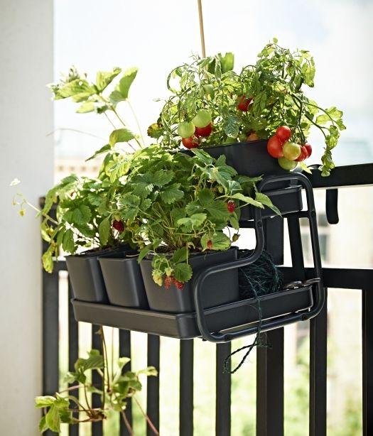 Až 6 kvetináčov je umiestnených na tomto držiaku. Zasadíte 6 druhov byliniek alebo dáte radšej prednosť paradajkám?