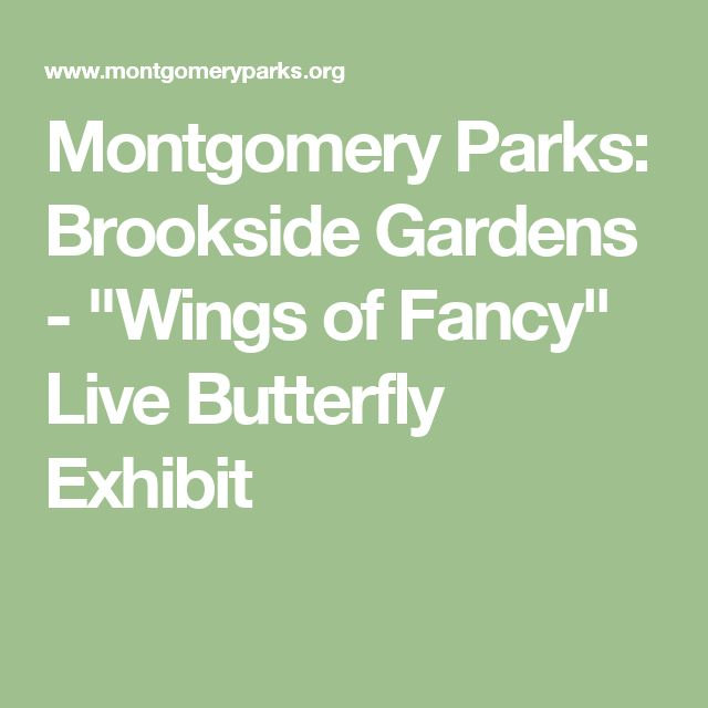 "Montgomery Parks: Brookside Gardens - ""Wings of Fancy"" Live Butterfly Exhibit"