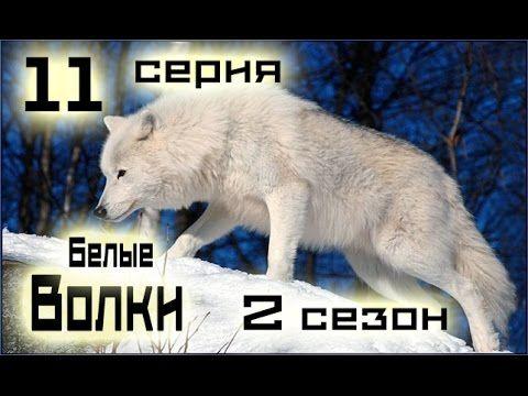 Сериал Белые волки 11 серия 2 сезон (1-14 серия) - Русский сериал HD
