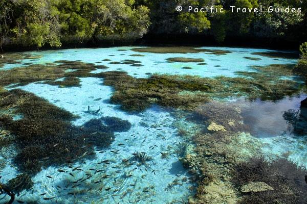 Mare Picture, Loyalty Islands Natural Aquarium, West Coast