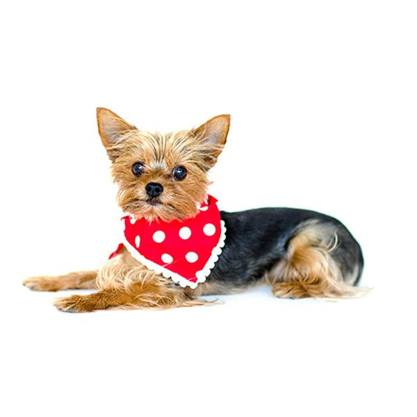Mr Pickles's Pieces of Flair Bandanas  Cutie yorkie modelling our bandanas