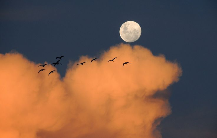 Луна управляет не только приливами и отливами в морях и океанах, но и нашими биоритмами. Лунная диета поможет похудеть и без вреда для здоровья.