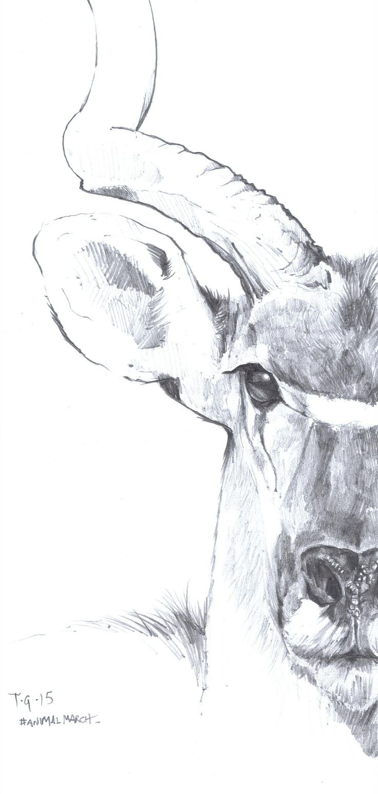 Quick Sketch of an Antelope by Anthony Greentree