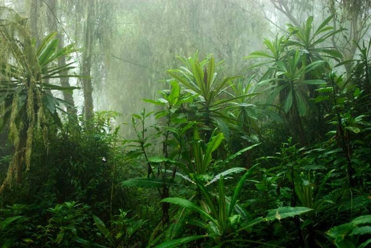 rainforest in the Congo