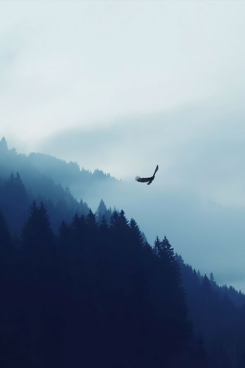 #fly #away another day – #prettylights