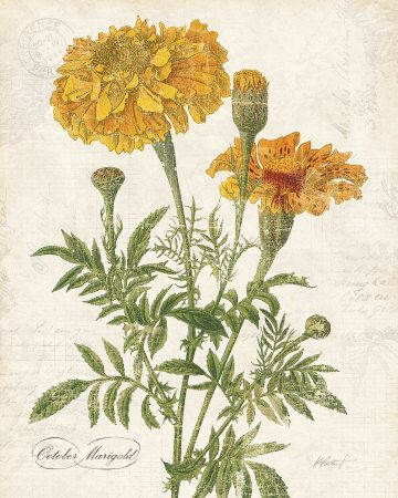 1000 Ideas About Marigold Tattoo On Pinterest Peonies