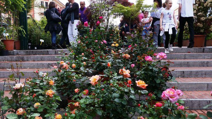Viali piazze e strade del centro si trasformano in - Giardini e fiori ...