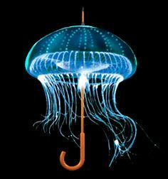 Image result for jelly fish led