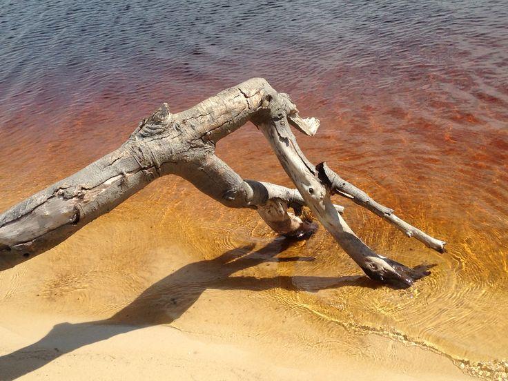 Natures Art  ~ Bribie Island SE Queensland. Australia