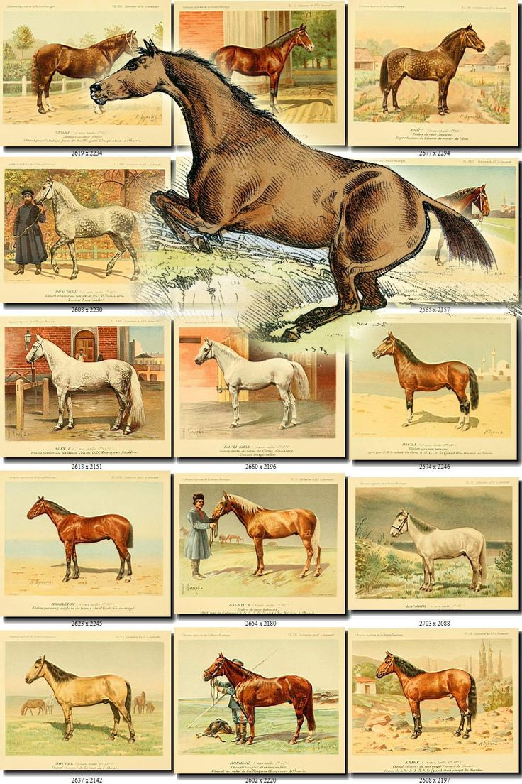 HORSES-3 Collection of 144 vintage images Russian Horses Onager Wild Ass animals High resolution digital download printable mammalia mammals by ArtVintages on Etsy