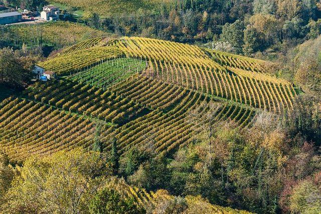 Vineyards in Canelli, Asti and Moscato wine region of Piemonte, Italy. Torre dei Contini, Canelli by jacqueline.poggi, via Flickr