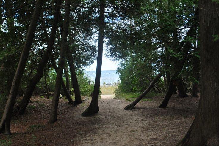 Trees and Lake Huron