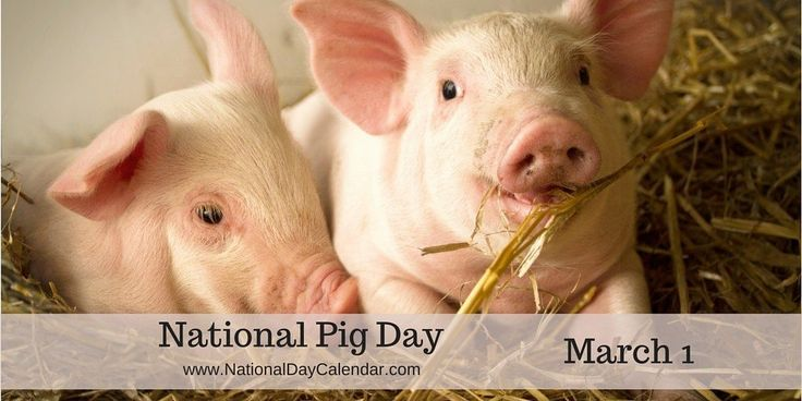 Oink Oink It's #NationalPigDay WooHoo! Bacon on the hoof -- It's a great day!