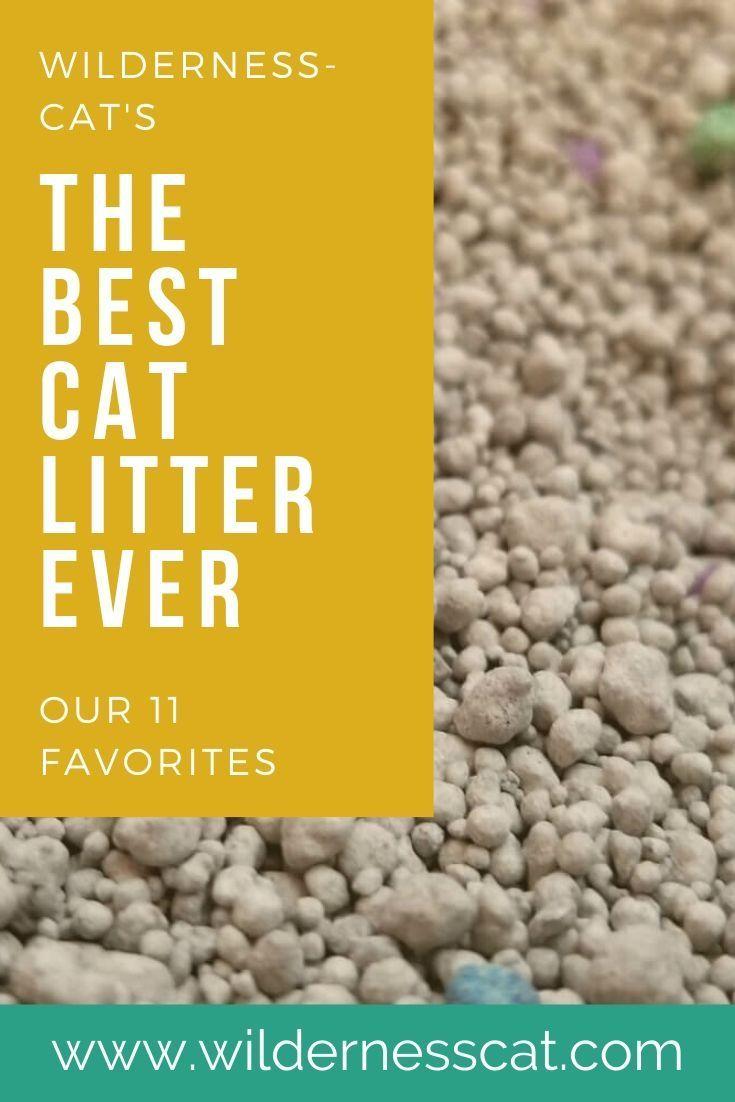 The Best Cat Litter In The World 11 Best Cat Litters Of 2020 In 2020 Cat Litter Best Cat Litter Cool Cats