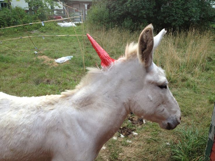 Check out how to make a real live unicorn its so easy to