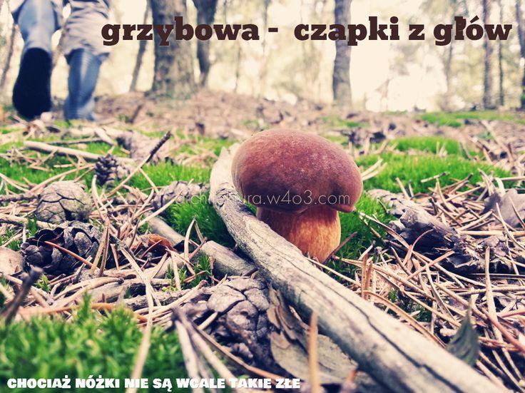 grzybowa -  czapki z glów / , / chociaż nóżki nie są wcale takie złe