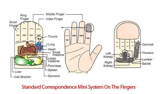 mini system index finger (With images) | Acupressure ...