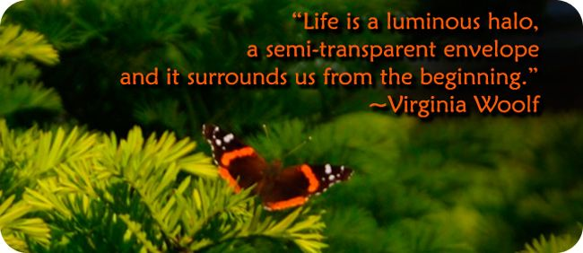 Life is a luminous halo, a semi-transparent envelope and is surrounds us from the beginning. -Virginia Wolf