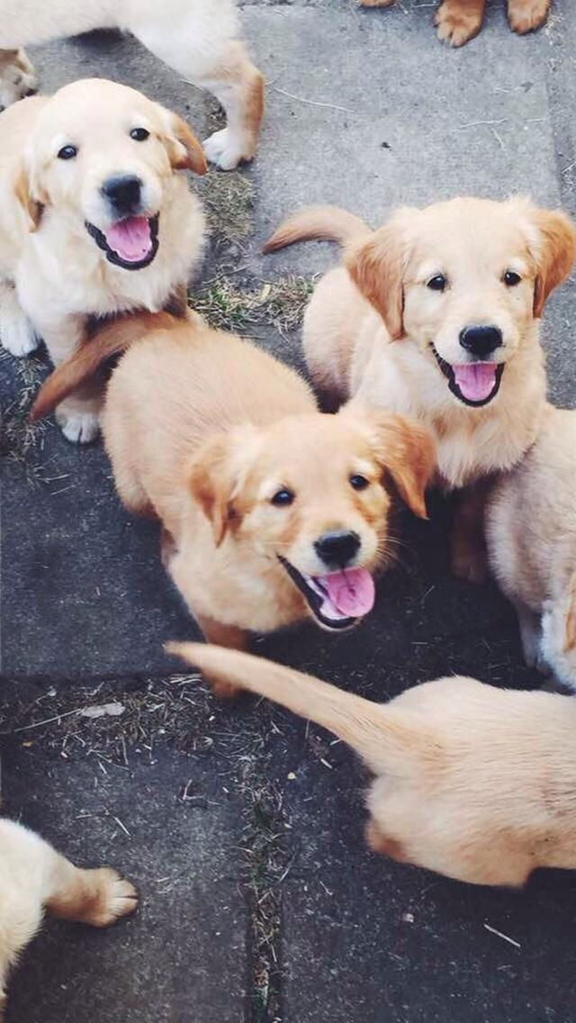 417 best Puppy Haven images on Pinterest