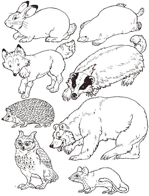 """for Jan Brett's """"Mitten"""" - put the animals in the mitten"""