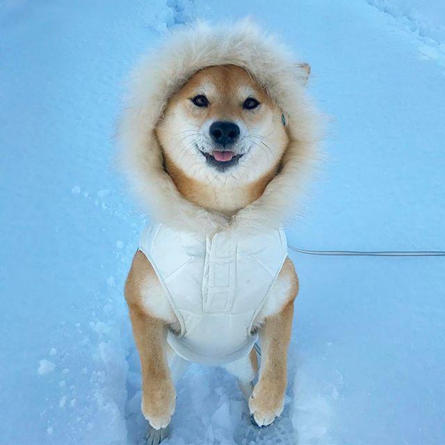 """I wonder if the snow LOVES the trees and fields, that it kisses them so gently?"" #不思議の国のアリス にこんな一説ありましたん #ねぇほら #マロママさん意外と #メルヘンチック #ねぇ奥さん #柴犬 #shiba #shibainu #weeklyfluff #ilovemydog #kiss #love #kawaii #cute #Regram via @minapple"