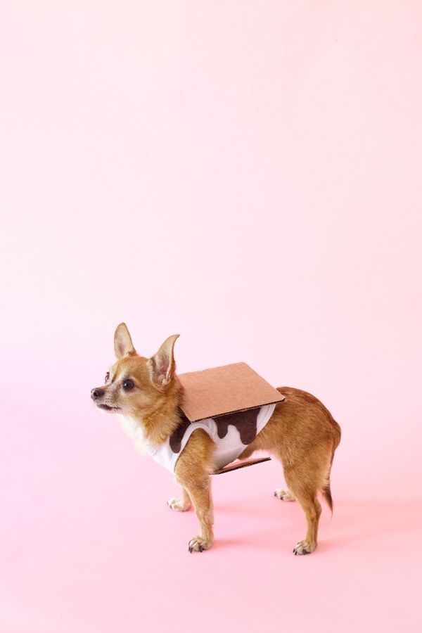 Delectably adorable DIY S'mores Dog Costume!