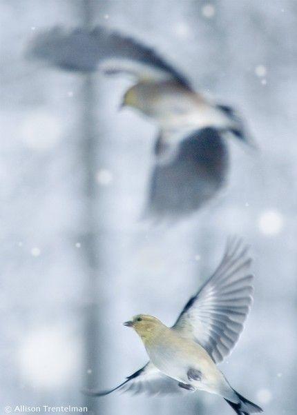 birds by RockyTopPrintShop