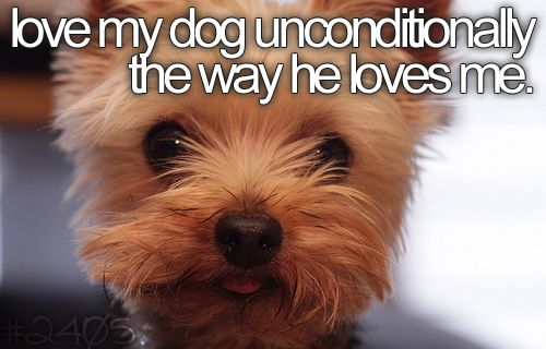 My little Bailey: Buckets Lists, New Puppys, Yorkie, Pet, Yorkshire Terriers Puppys, Dogs Lovers, Puppys Faces, Animal, Scottish Terriers