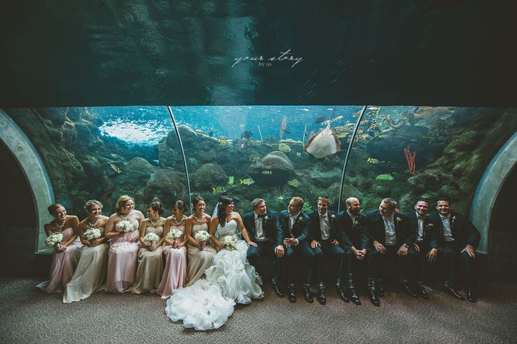 ... Aquarium Wedding - Tampa Wedding Photographer | Destination Wedding