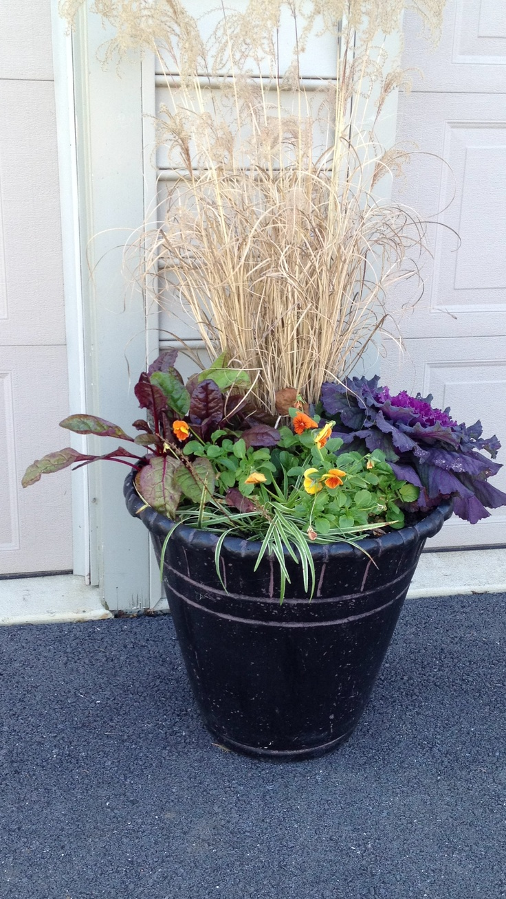 Fall Planter Ornamental Grass Cabbage Kale Swiss Chard