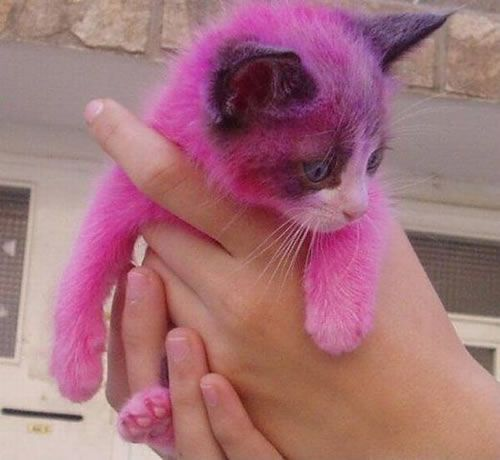 Hot pink kitten