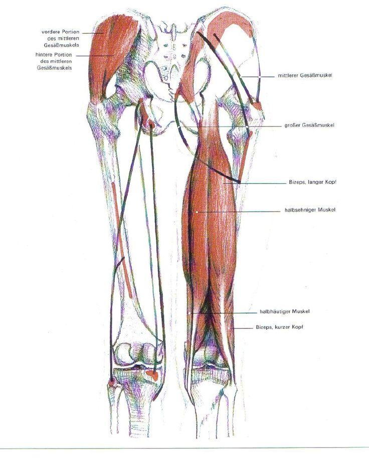 Новости | Anatomy | Pinterest | Art tutorials and Anatomy