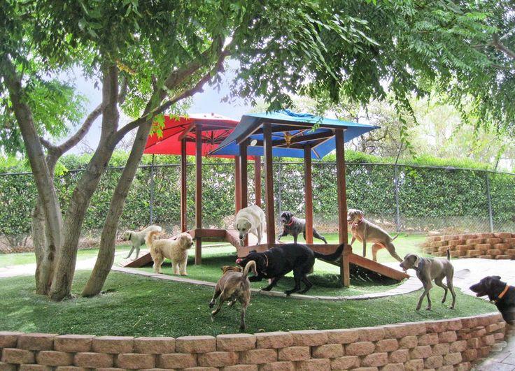 Dog Training In Mankato Mn