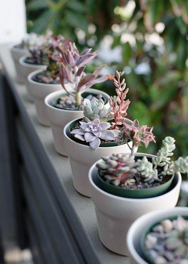 Des succulentes pour décorer