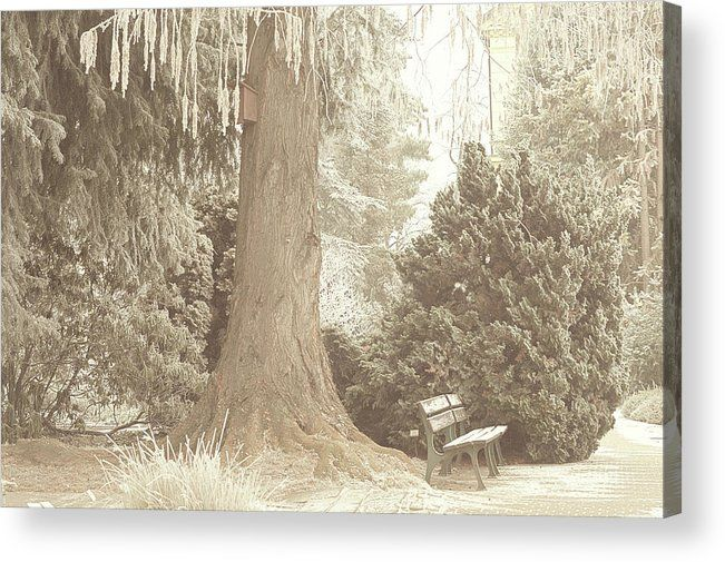 Jenny Rainbow Fine Art Photography Acrylic Print featuring the photograph In Old Park. Gentle Winter by Jenny Rainbow