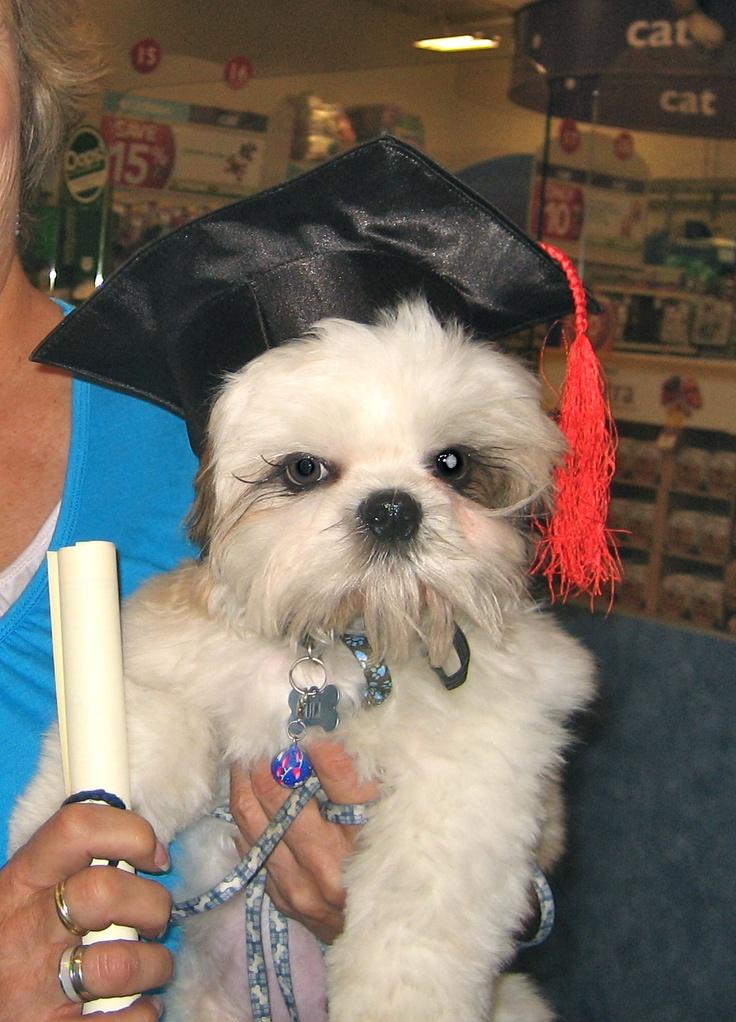 Graduation from Puppy schoolPuppies Schools