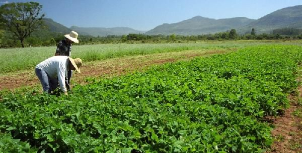Agropecuária catarinense deve faturar R$ 28,3 bilhões em 2016