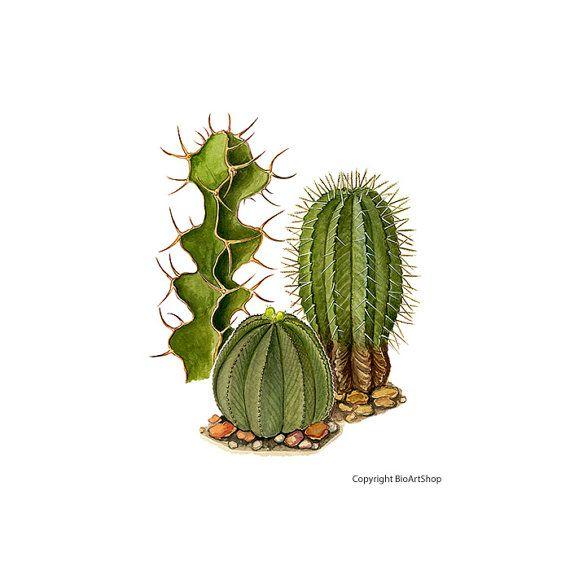 cactuses III.